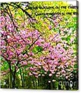 Spring Tree Blossoms Acrylic Print