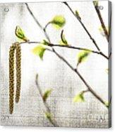 Spring Tree Branch Acrylic Print