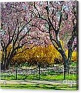 Spring Walk Acrylic Print