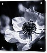 Spring White Dancing Acrylic Print