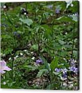 Spring Wildflowers Along Panther Branch Trail Frozen Head Tennessee State Park Tennessee Acrylic Print