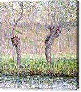 Spring Willows Acrylic Print