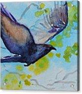 Spring Wings Acrylic Print