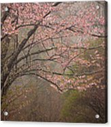 Spring Woods Acrylic Print by Patrick Downey