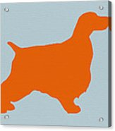 Springer Spaniel Orange Acrylic Print by Naxart Studio