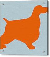 Springer Spaniel Orange Acrylic Print