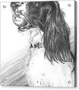 Springer Spaniel Playing Fetch Pencil Portrait Acrylic Print