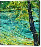 Tree At Ichetucknee Acrylic Print