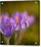 Springs Delicate Richness Acrylic Print by Mike Reid