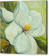 Spring's First Magnolia 2 Acrylic Print
