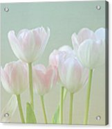 Spring's Pastels Acrylic Print