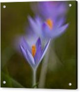 Springs Soft Procession Acrylic Print by Mike Reid