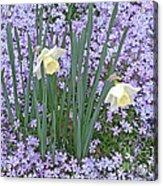 Springtime Beauties Acrylic Print