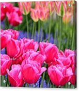 Springtime Blooms In Holland Acrylic Print