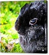 Springtime Bunny Acrylic Print