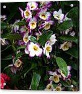 Springtime Flowers At Biltmore Estate Acrylic Print