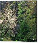 Springtime Forest Blossoms  Acrylic Print