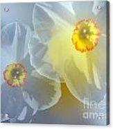 Springtime Gathering 5 Acrylic Print