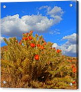 Springtime In Arizona Acrylic Print