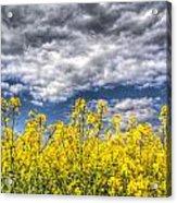 Springtime In England Acrylic Print
