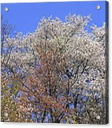 Springtime In Great Balsam Mountains Acrylic Print