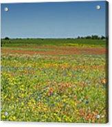 Springtime In Texas 2 Acrylic Print