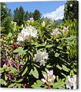 Springtime In The Cascades Acrylic Print