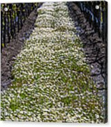 Springtime In The Vineyards Acrylic Print