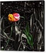 Springtime Kiss Acrylic Print by Dan Quam