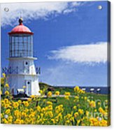 Springtime Lighthouse Acrylic Print