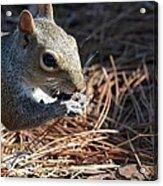 Springtime Nutcracker Acrylic Print