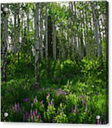 Springtime On The Grand Mesa Acrylic Print