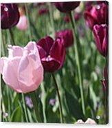 Springtime Sadness Acrylic Print
