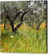 Springtime Sicily Acrylic Print