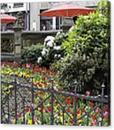 Springtime Tulips In Cologne Germany Acrylic Print