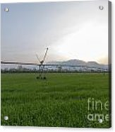 Sprinklers On A Green Field Acrylic Print
