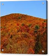 Sproul State Forest Acrylic Print