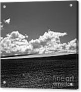 Sprouting Field Of Sunflowers And Field Of Rape At Back. Auvergne. France Acrylic Print