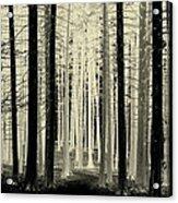Spruce Magic Acrylic Print