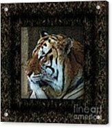 Sq Tiger Profile 6k X 6k Bboo Matt Acrylic Print
