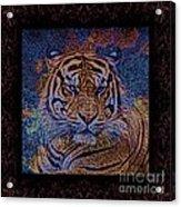 Sq Tiger Sat 6k X 6k Cranberry Wd2 Acrylic Print