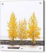 Square Diptych Tree 12-7693 Set 1 Of 2 Acrylic Print