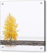 Square Diptych Tree 12-7693 Set 2 Of 2 Acrylic Print