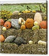 Squash Gourds And Pumpkins Acrylic Print