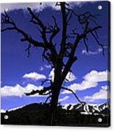 Squigly Tree Acrylic Print