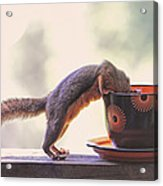 Squirrel And Coffee Acrylic Print