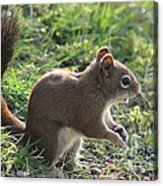 Squirrel And His Sunflower Seed Acrylic Print