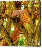 Squirrel Away Acorn Acrylic Print