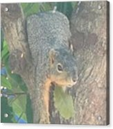 Squirrel Chillin Acrylic Print