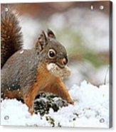 Squirrel In Snow Acrylic Print